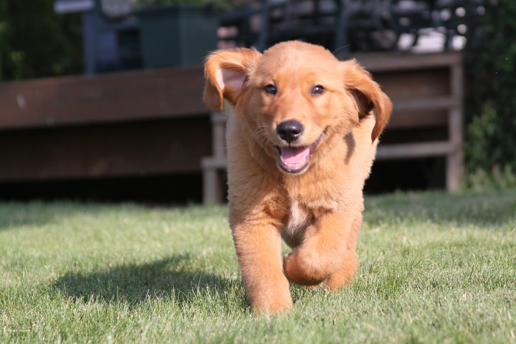 another-running-puppy